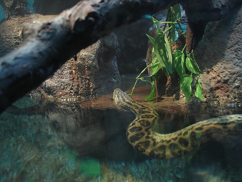 2013 Water Snake